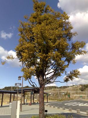 20090217inamisanagi1.jpg
